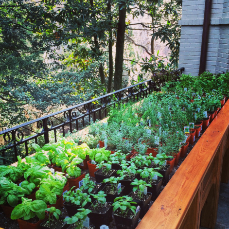 We go through herbs like a wildfire so grow our own and a lot of them.
