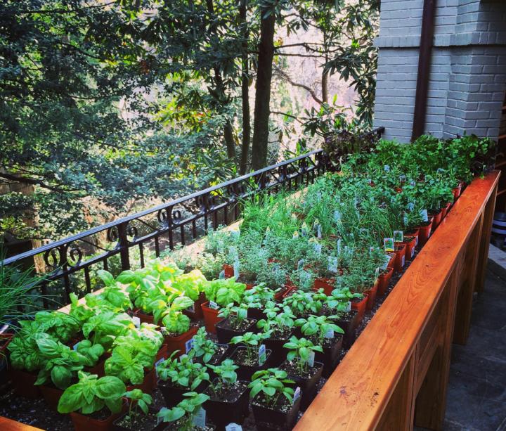 The LPB Herb Garden